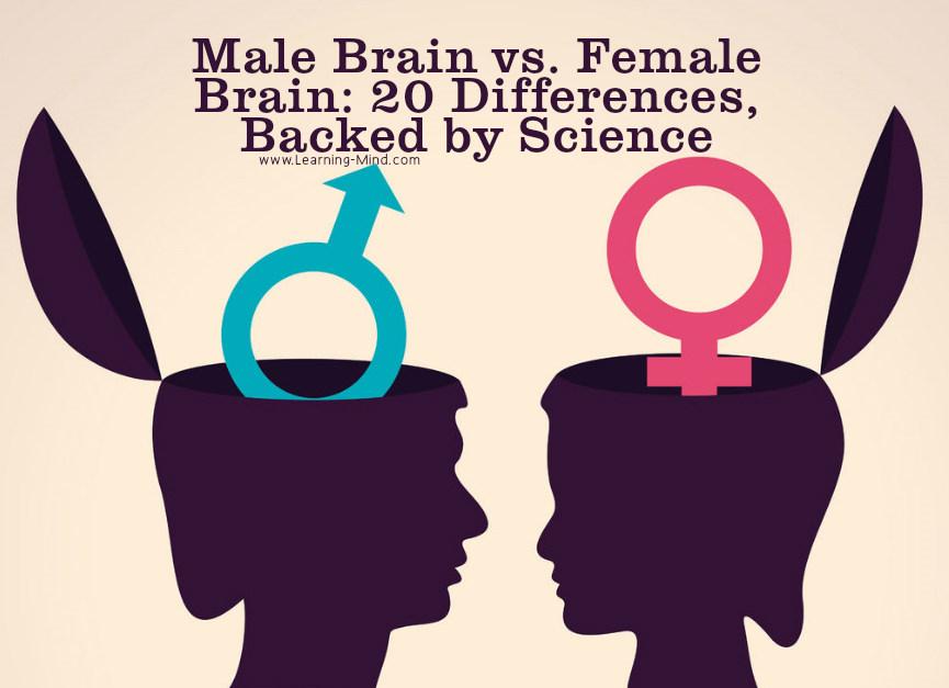 male female brain