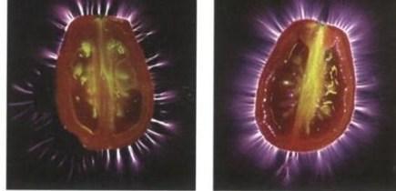 Kirlian photography aura tomatoes
