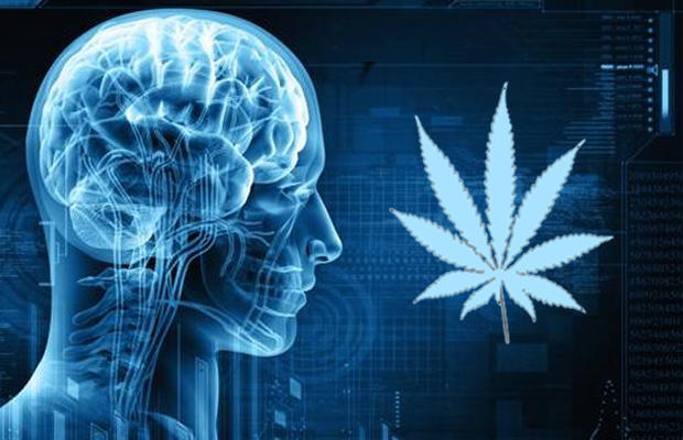Chronic Pot Smoking Shrinks the Brain But Increases Its Connectivity