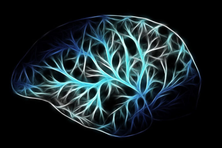 Neurogenesis Allows Adult Brains to Change According to the Environment