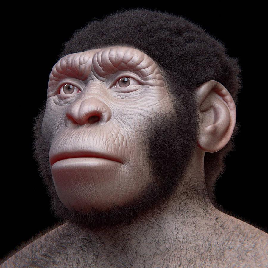 Homo naledi unknown human ancestor