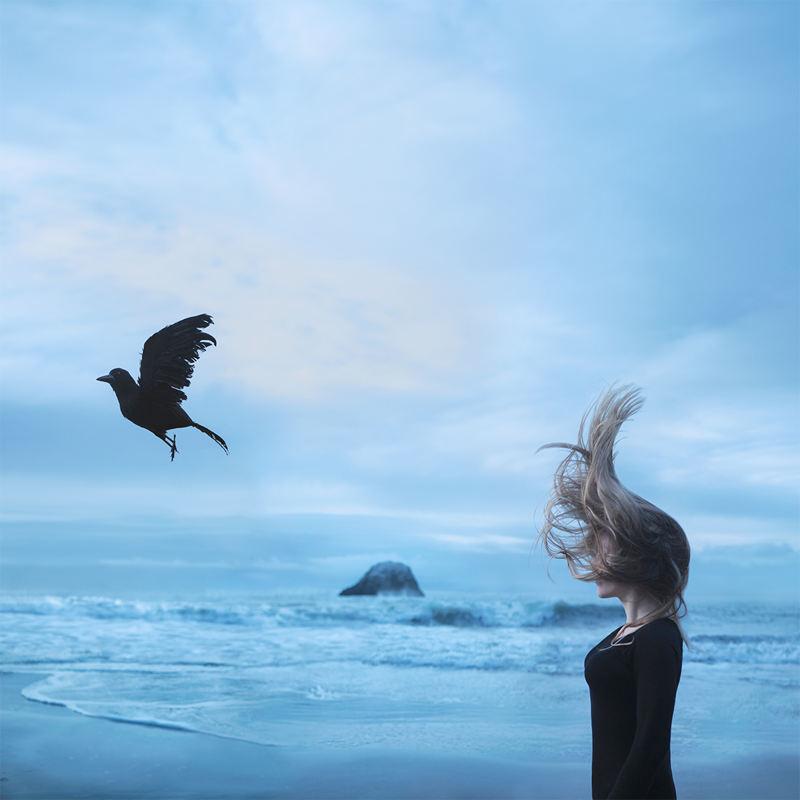 Beauty of Solitude bird freedom