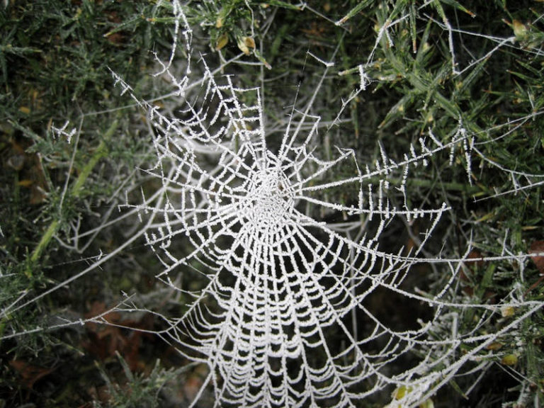 Scientists Gave Spiders LSD and Other Drugs and Here Is What Happened