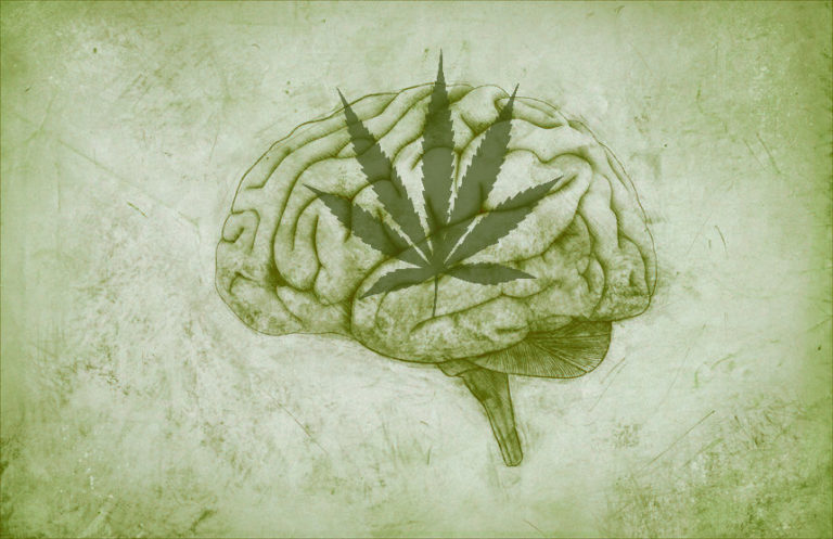 5 Facts about Cannabis That Will Make You Smarter