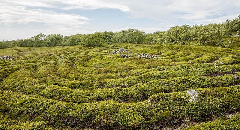 Bolshoi_Zayatsky_Island-Stone_labyrinth