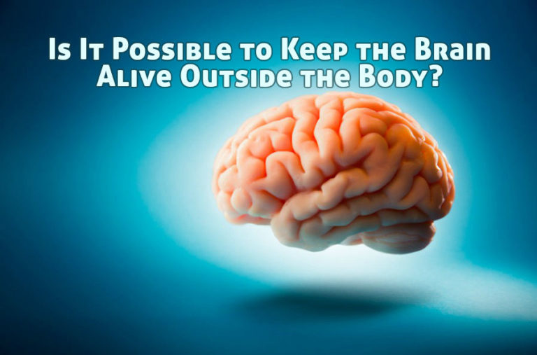 Is It Possible to Keep the Brain Alive Outside the Body?