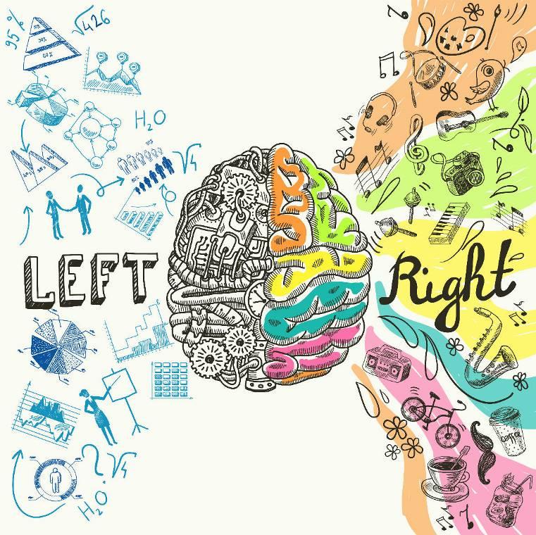 two brain hemispheres