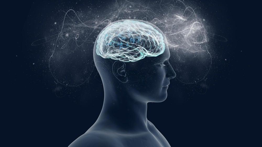 magic mushrooms brain