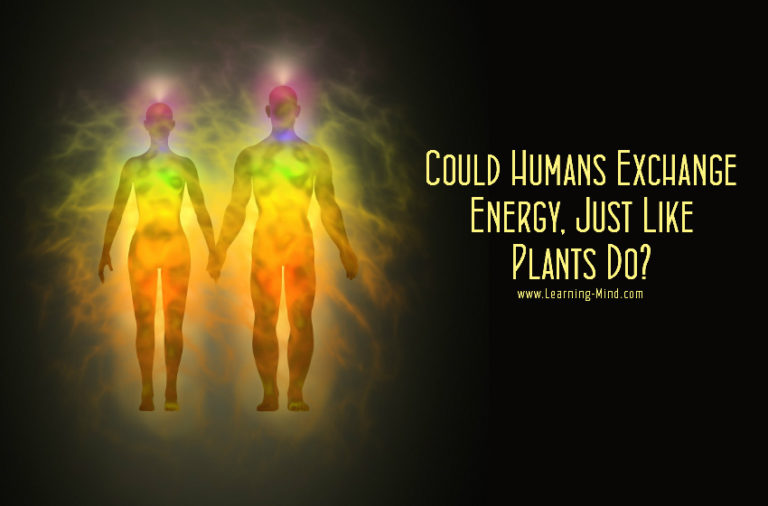 Could Humans Absorb and Transfer Energy, Just Like Plants Do?