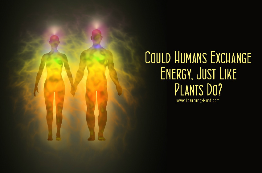 Humans Absorb and Transfer Energy