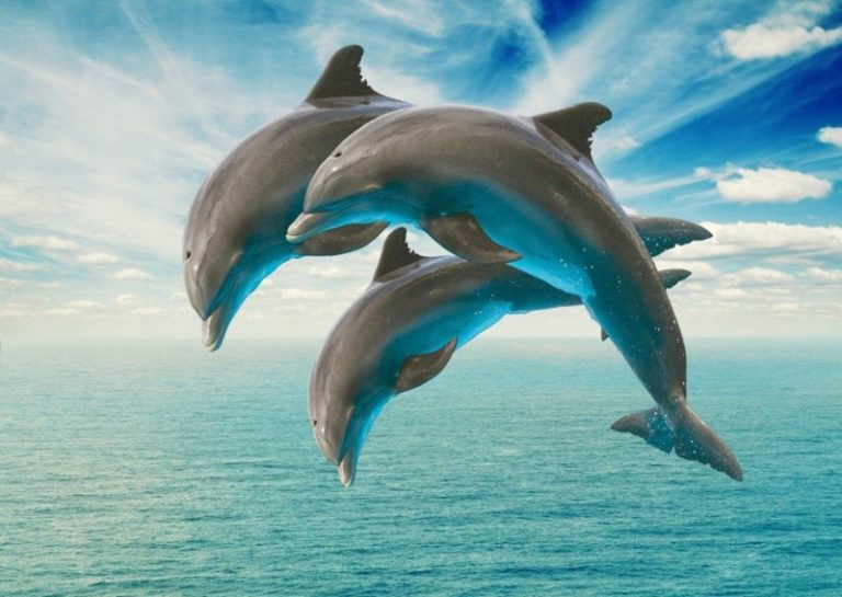 Dolphins Exhibit Human Communication Patterns, Study Finds