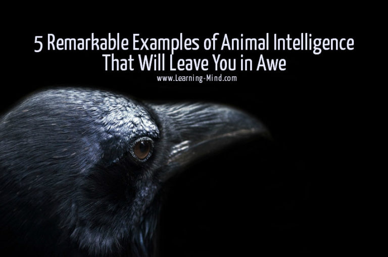 5 Remarkable Examples of Animal Intelligence That Will Leave You in Awe