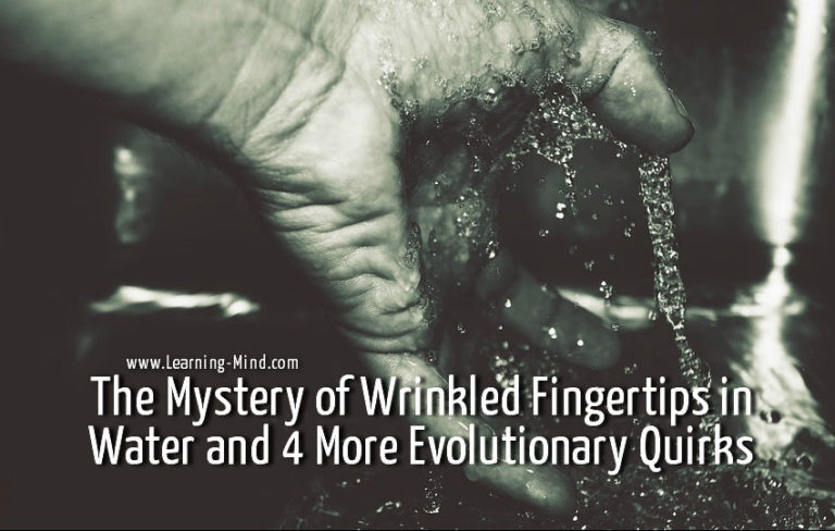 Why Do We Get Wrinkled Fingertips in Water? Evolutionary Quirks Explained