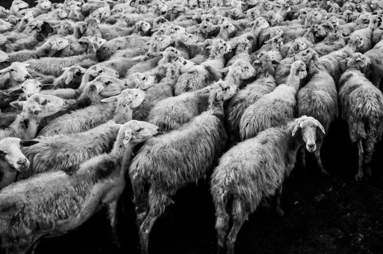 5 Examples of Herd Mentality and How to Avoid Falling into It