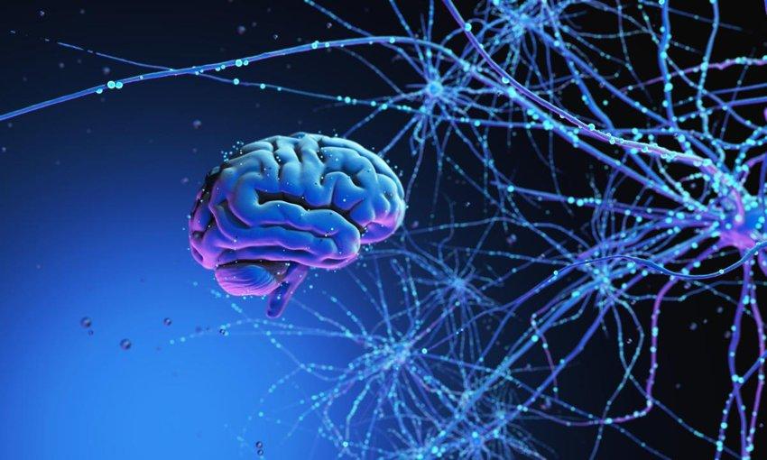 memory theories brain