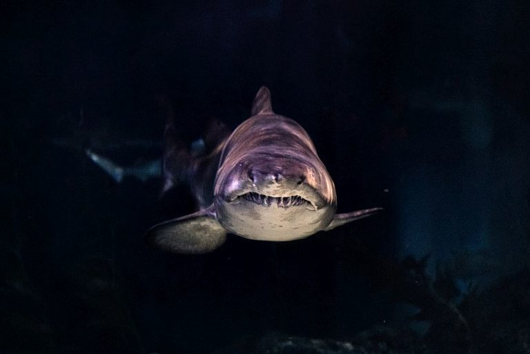 What Do Dreams about Sharks Mean? Scenarios & Interpretations