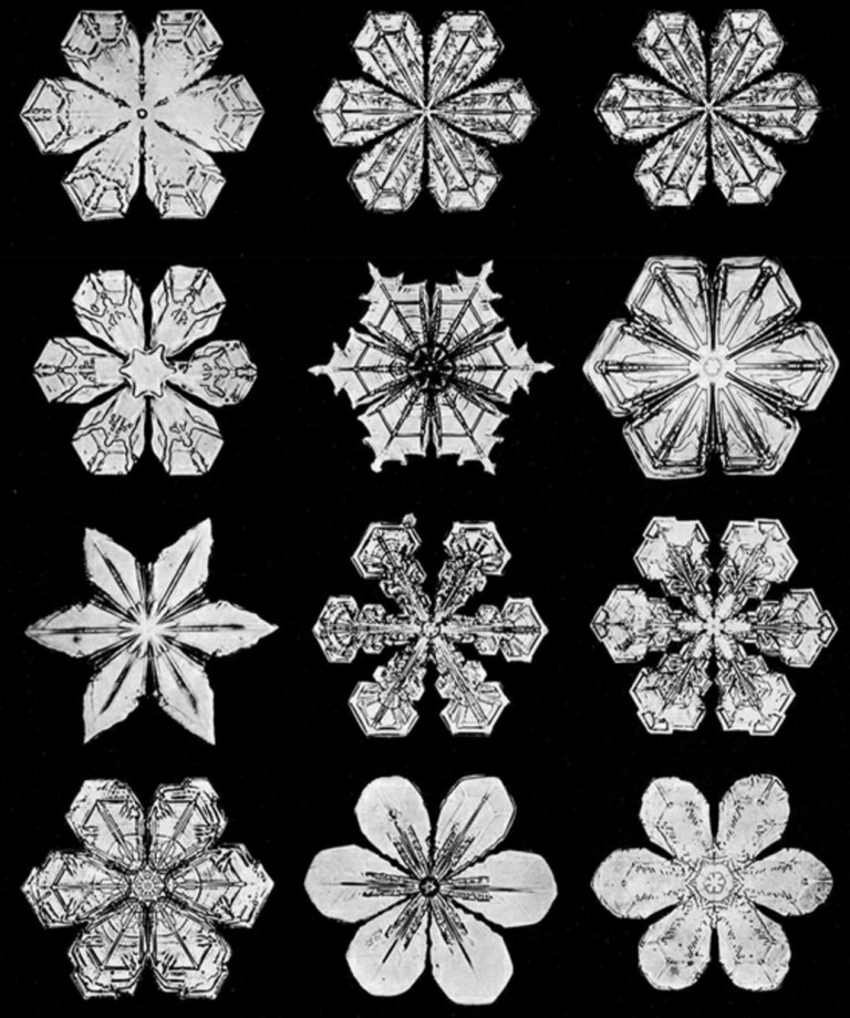 snowflakes under a microscope snowflake man