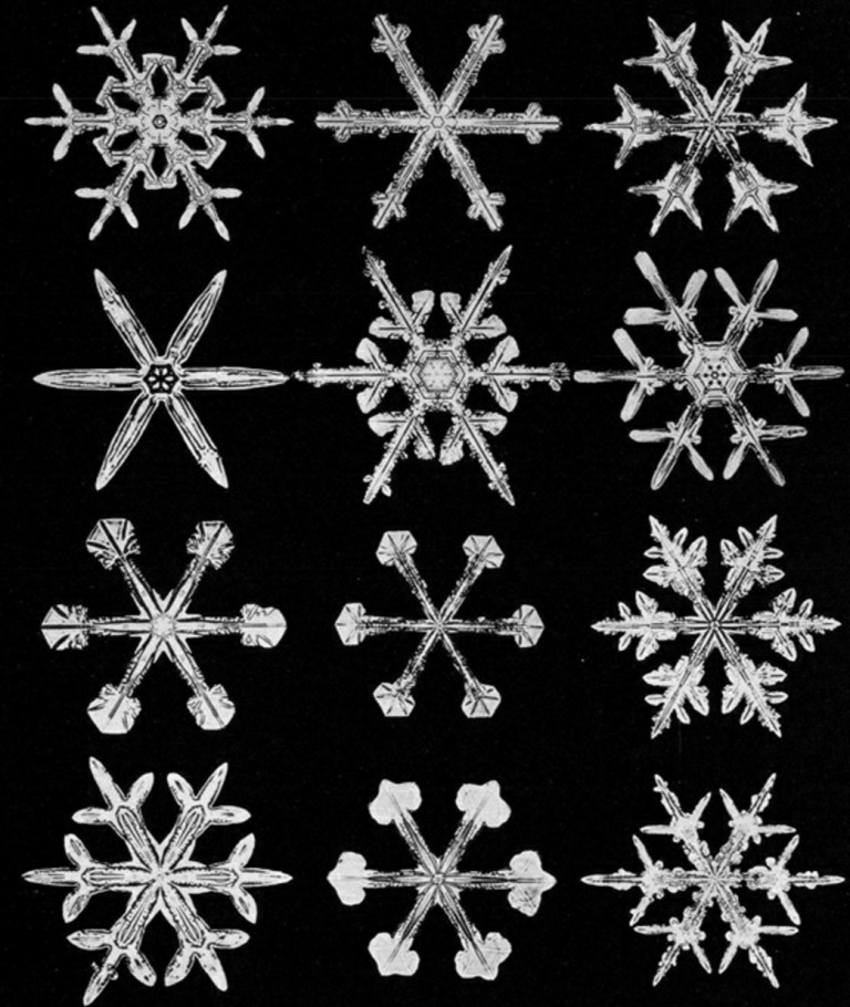 snowflakes under a microscope bentley
