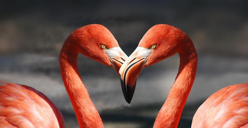 flamingo dreams about birds
