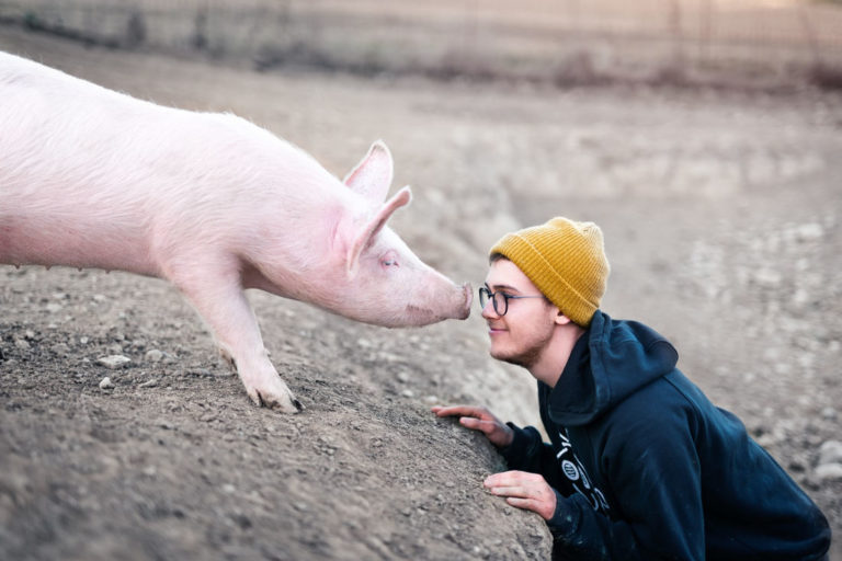 Amazing Pig Intelligence: Pigs Turn Out to Be Smart Enough to Play Video Games!