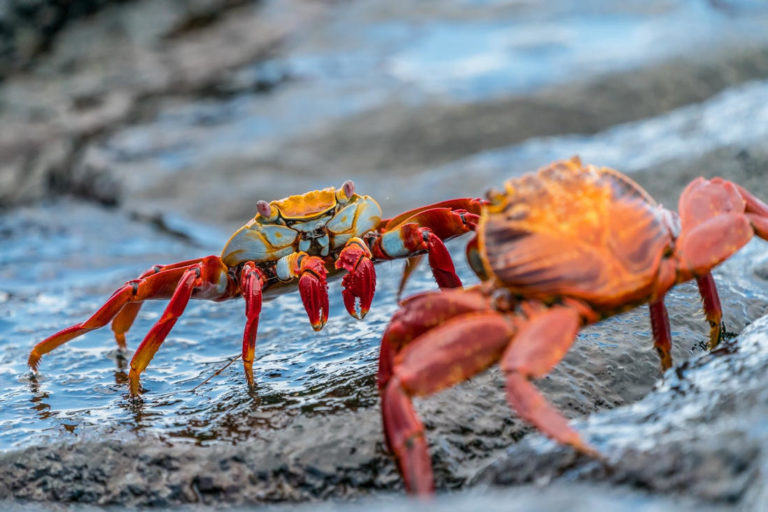 Crab Mentality Explains Why People Are Not Happy for Others