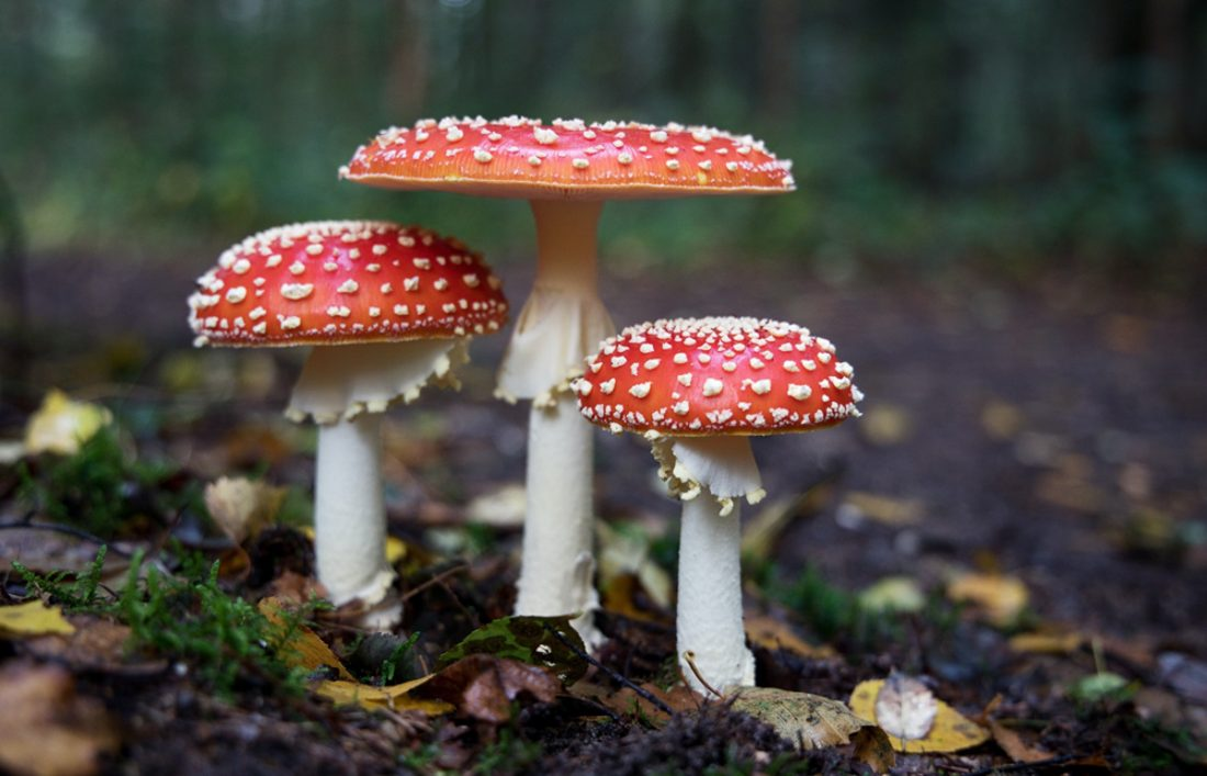 Study Shows Mushrooms Can Learn, Make Decisions & Function as Individuals